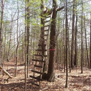 Featured: Hunting Stand