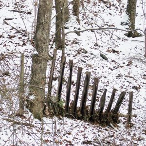 Featured: Old, broken-down pig fence in snowy woods