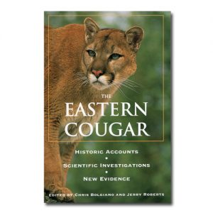 Featured: The Eastern Cougar