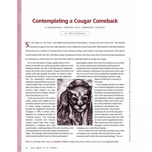 Featured: Contemplating a Cougar Comeback - Full Page