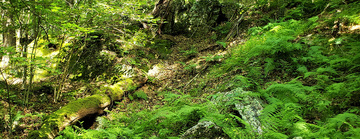 A fallen, mossy log amongst vibrant green ferns - Slider/Cover image