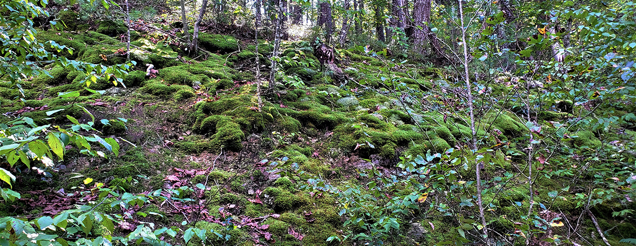 Cool green forest with patches of thick, soft moss - Slider/Cover image