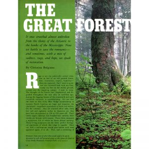 Featured: The Great Forest - Full Page